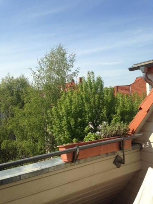 Ausblick vom Balkon - der Balkon darf gerne genutzt werden :-)