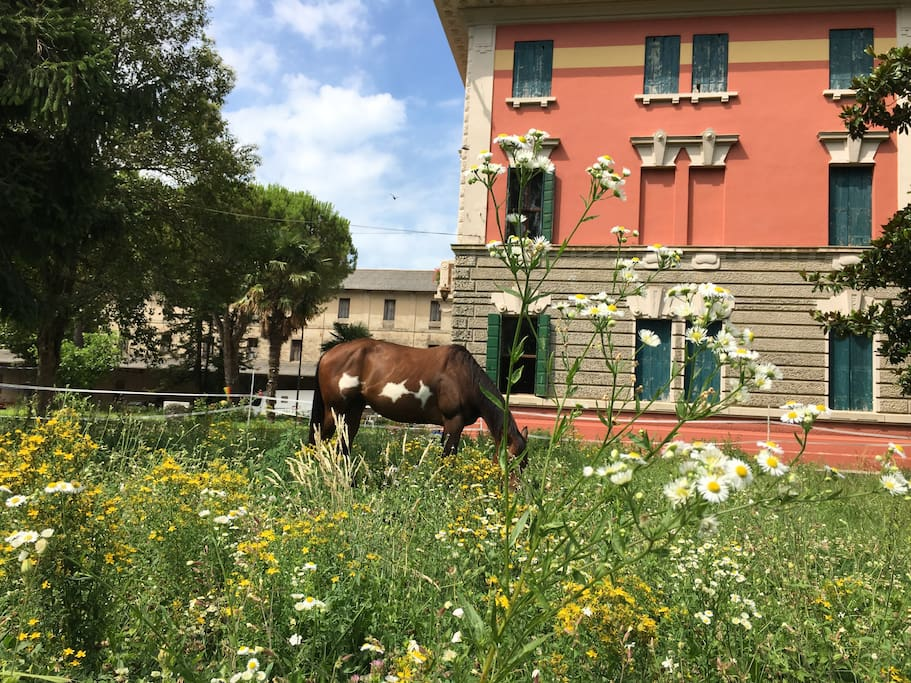 The villa and our horses
