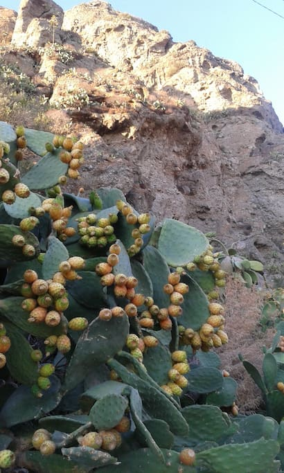 Do you know what these fruits are? And which is their name? Come to Calabria and discover it...