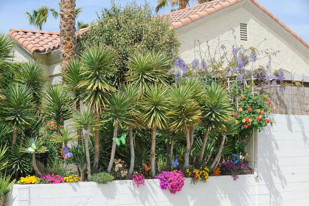 Front yard east wall of yucca & flowers