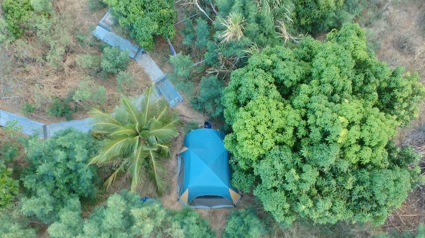 Camping - Mango Orchard