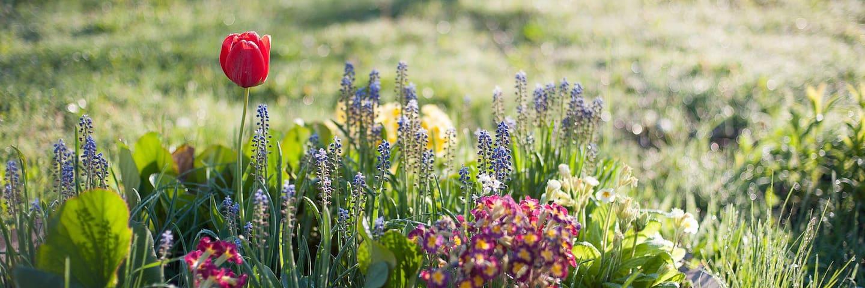 W kwiatowym ogrodzie Korolowej Chaty - Etno Agroturystyka