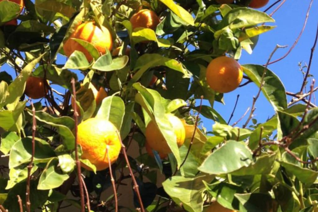 Onze eigen citroenen