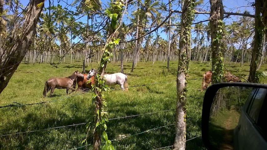 De-stress in Farm and Virgin Beach - Cabrera