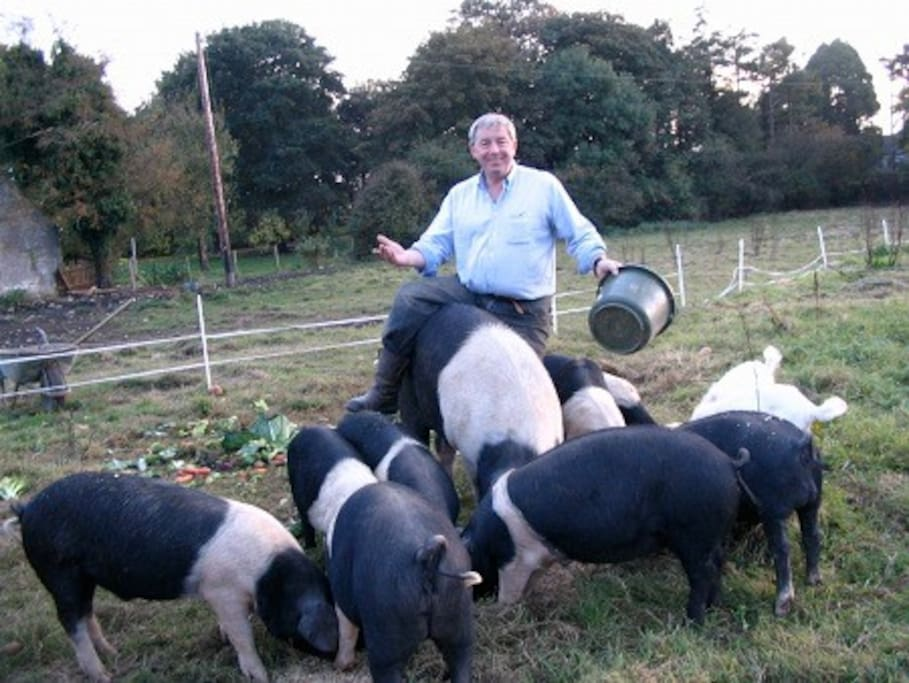 Alfie with his rarebreed pigs.