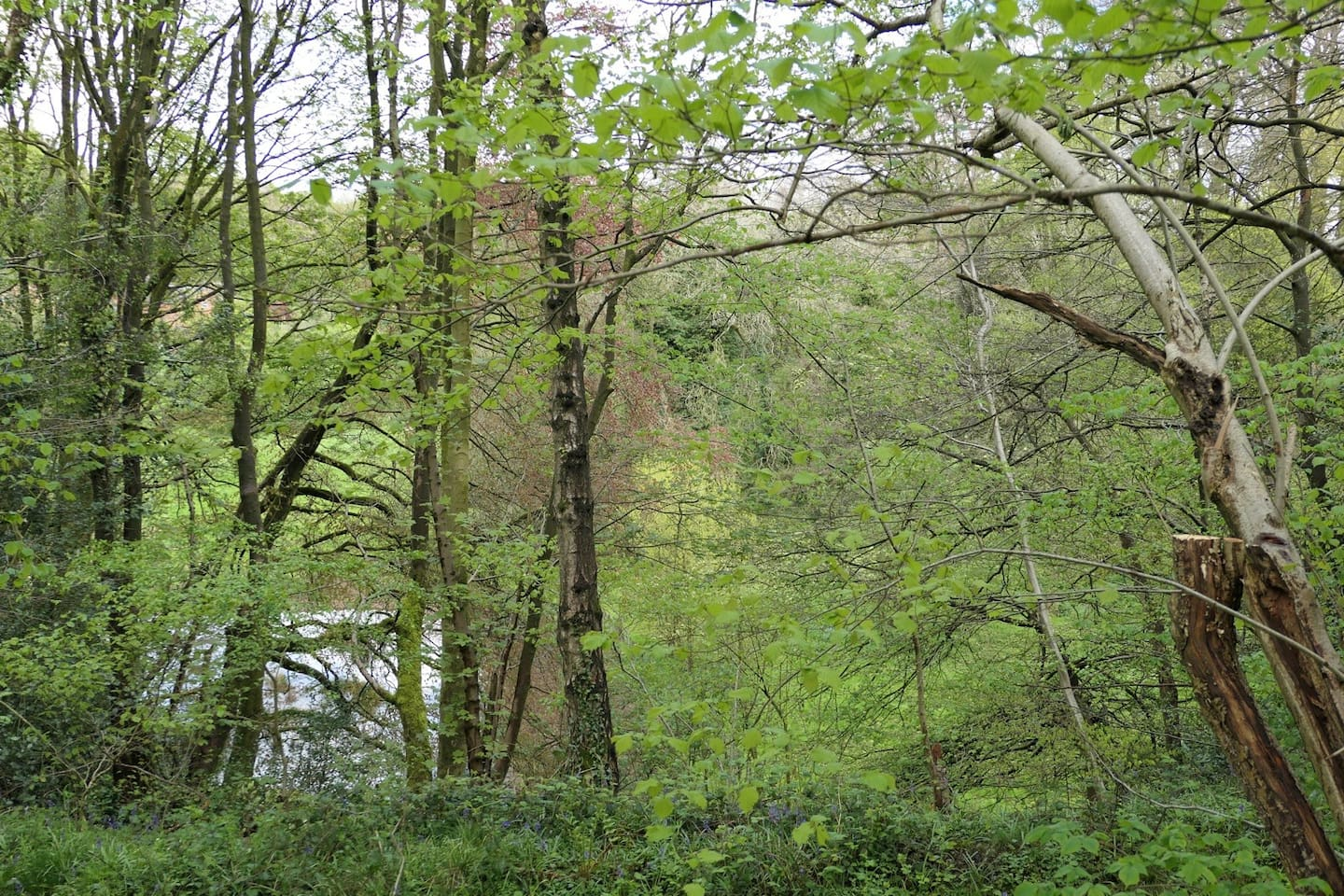 Woodland walk on the grounds with view to small lake.