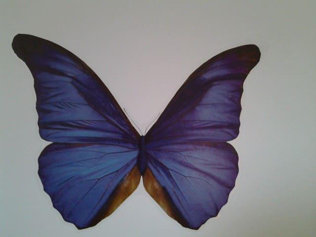 Chambre d'hôte papillon bleu - Plouëc-du-Trieux