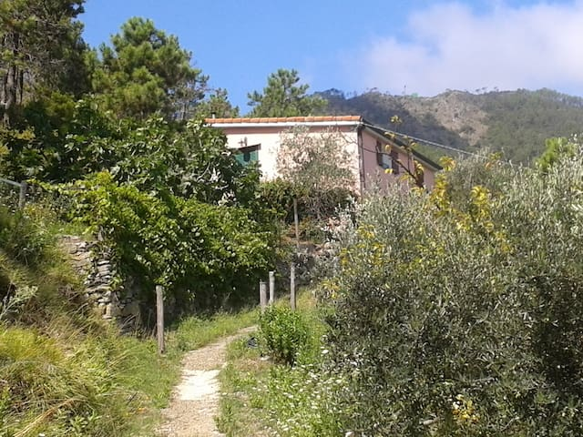 Cozy refuge nestled in the nature - Monterosso Al Mare - House