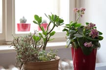 Some lively plants for better atmosphere