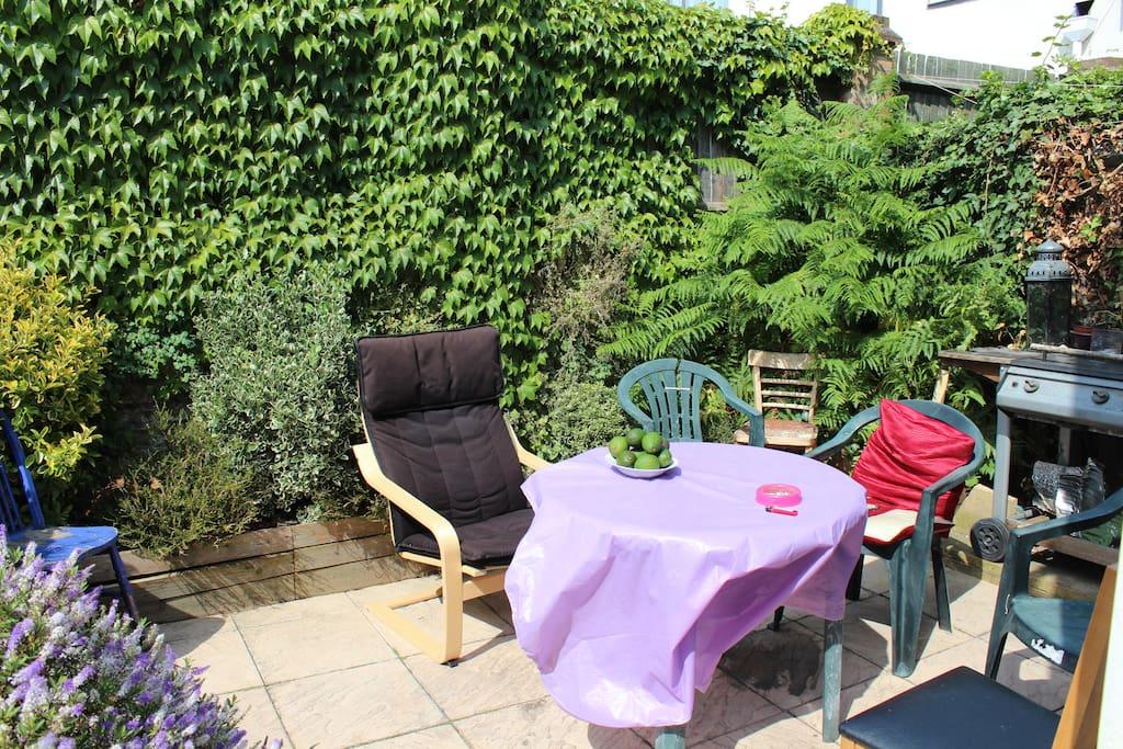 Our jungle garden