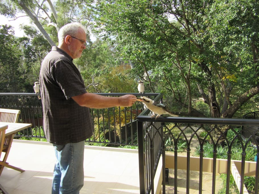 Brian feeding the kookaburras