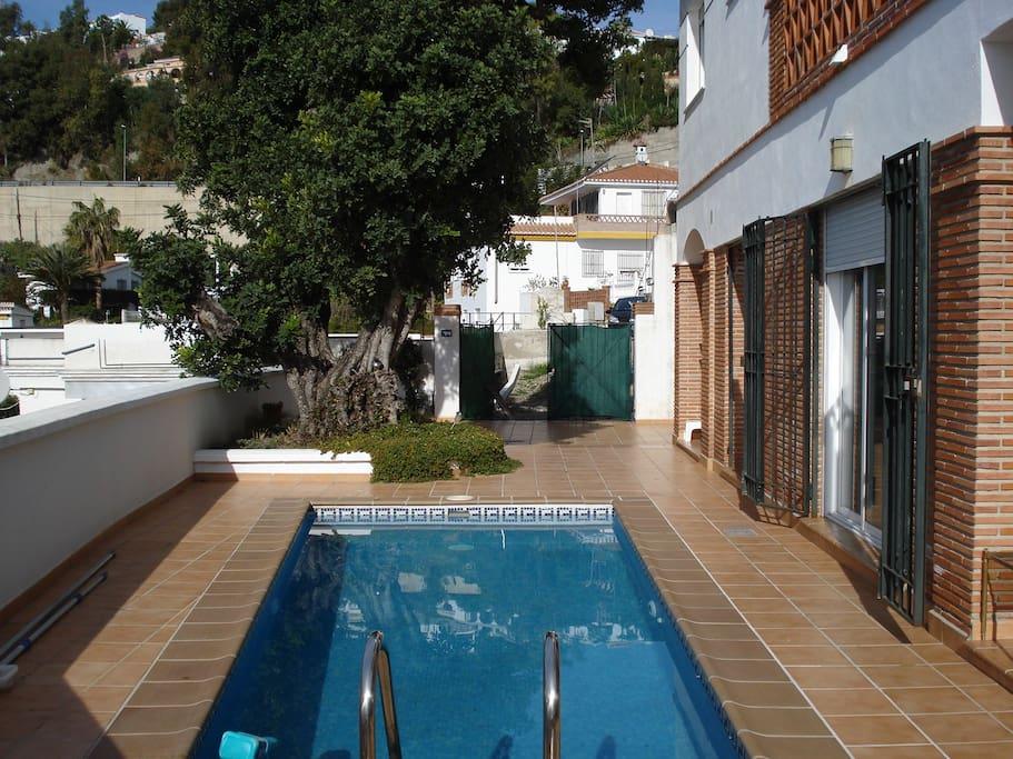 Pool and Carob tree