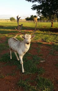 Guesthouse - - Krugersdorp - Σαλέ