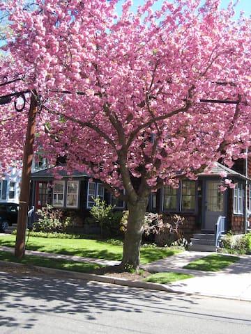 Beautiful townhouse in Princeton - Princeton - Ev