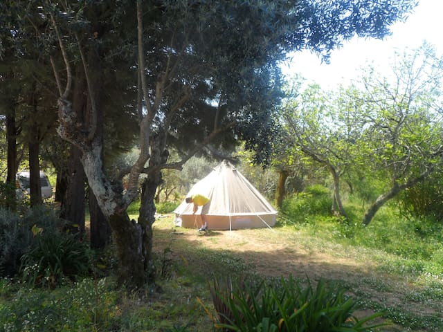 Safari Tent  1 - Redondo Lodges - Tomar - Tent