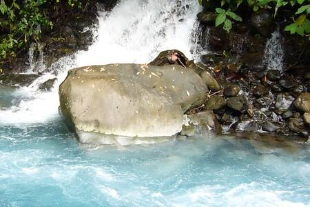 Blue River Resort and  Hot Springs, Costa Rica