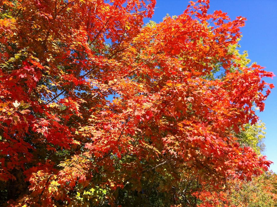 Fall foliage best in late September to mid-October