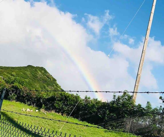 Hawai'i Sunshine