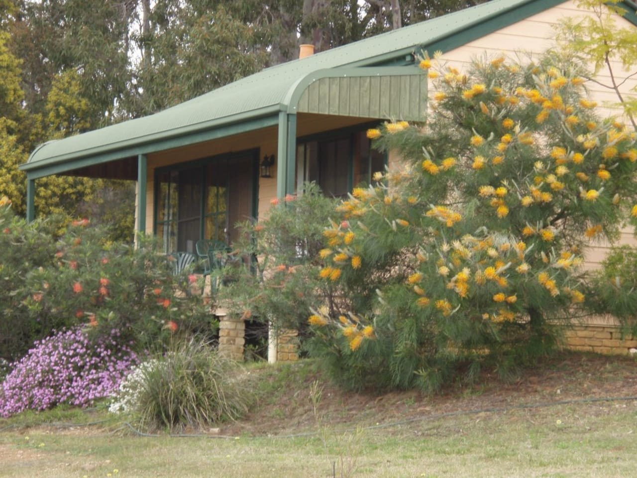 Sutherland is quiet and peaceful. A grove of grevilleas grows beside it, and kangaroos feed on the surrounding grass.