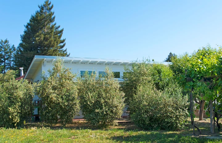 Private Cottage in the Olive Grove, 2min to Town!