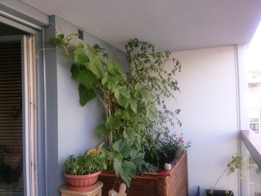 my green thumb :)...our balcony!
