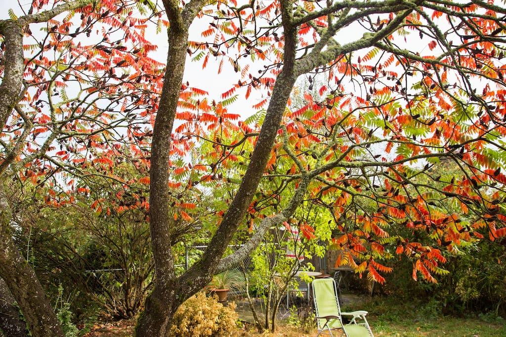 Autumn in the backyard under the gorgeous Sumac tree