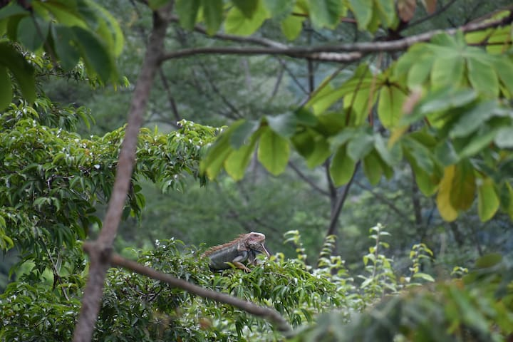 Telephoto lenses and binoculars come in handy when you want to see jungle life deep in the rainforest.