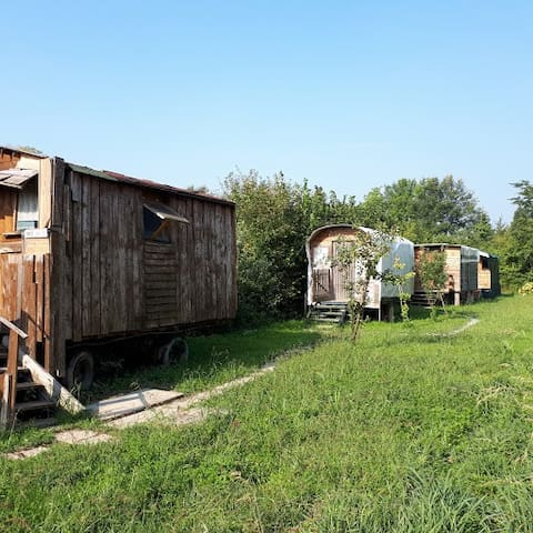 Eco camping with wagons for travelers