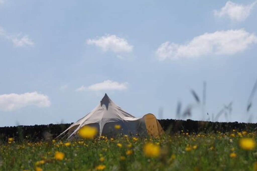 Toggle Tent, your own field and beautiful tent! Love the spring flowers and big blue sky!
