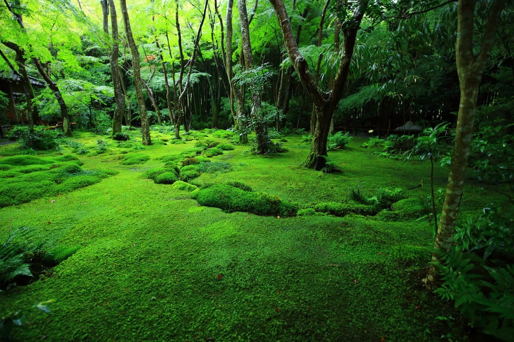 Everywhere Is Covered with Moss, Gio-ji Temple. In the rainy season, it would be a great time to visit there and feel the nature!