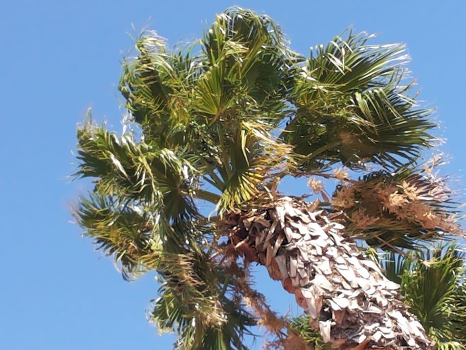 Slapen onder de ruisende palmen