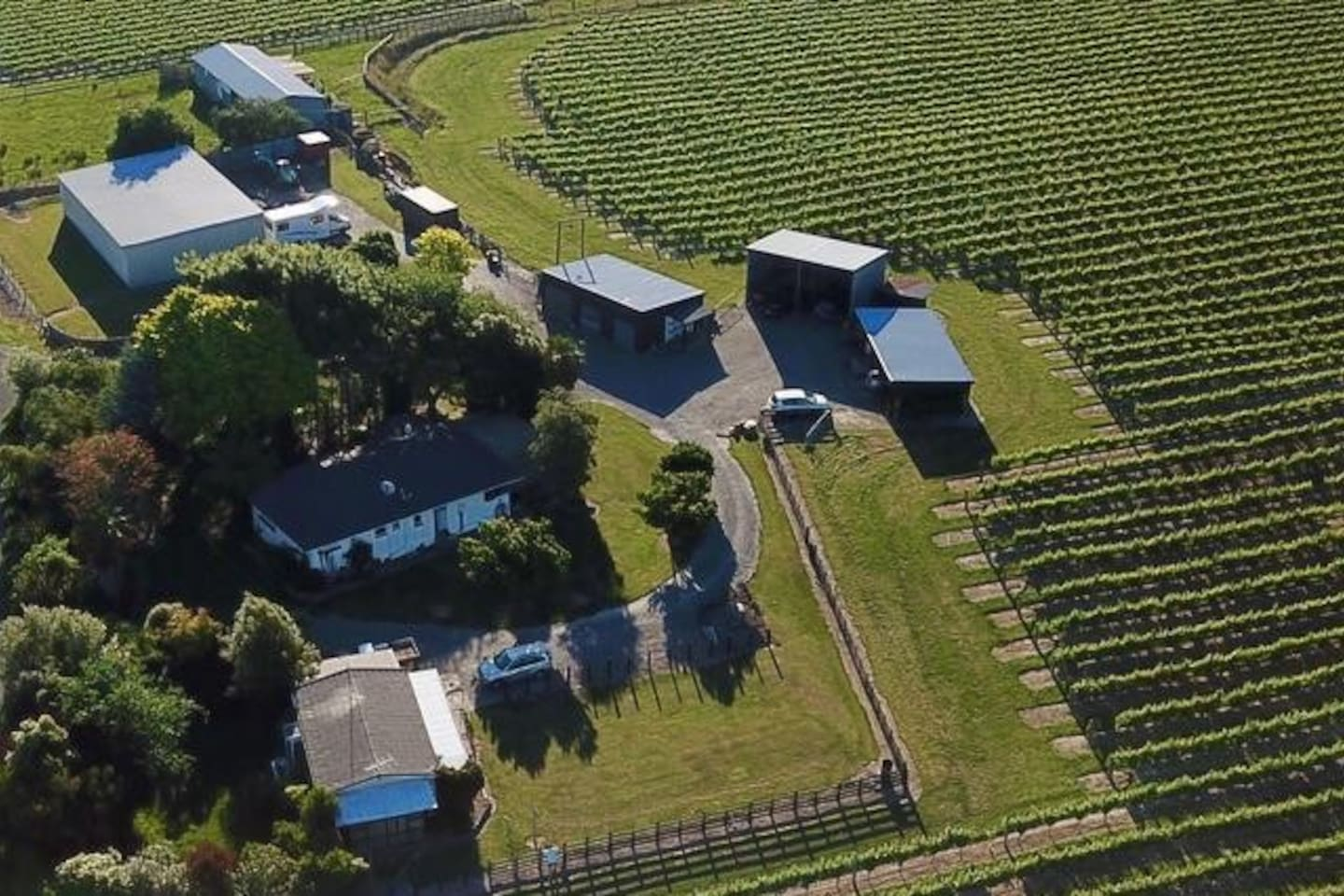 The garden and vineyard