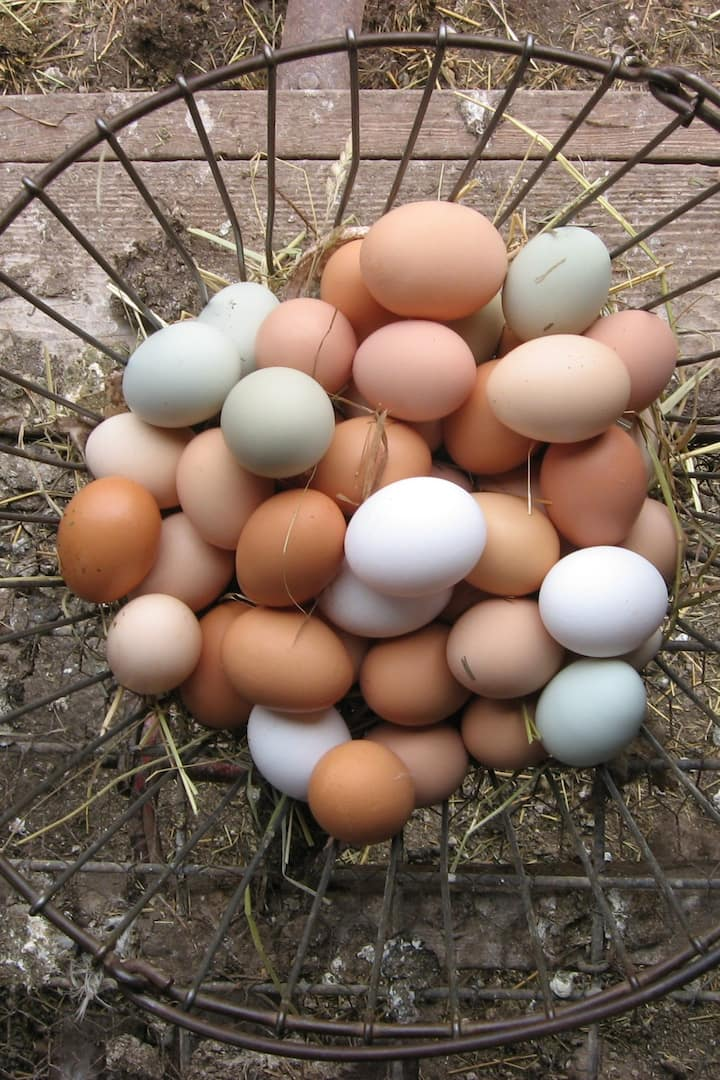 Gather eggs