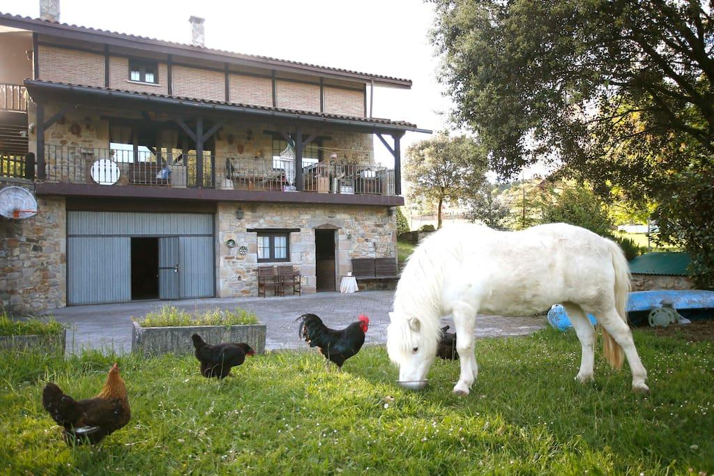 Apartamento rural centrico en plena naturaleza casas de - Casa rural mundaka ...