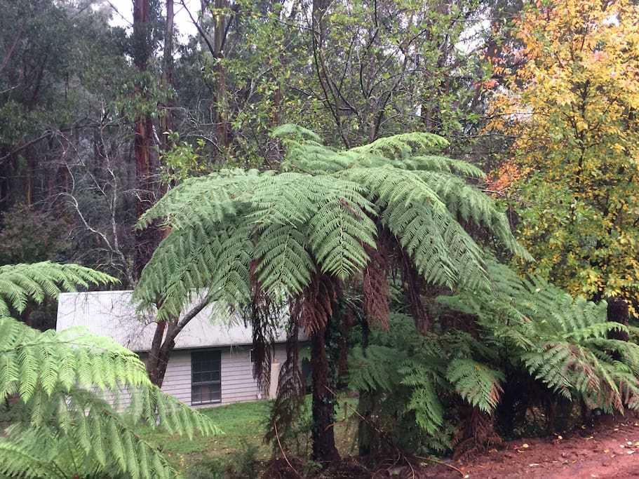 Nestled in the tree ferns