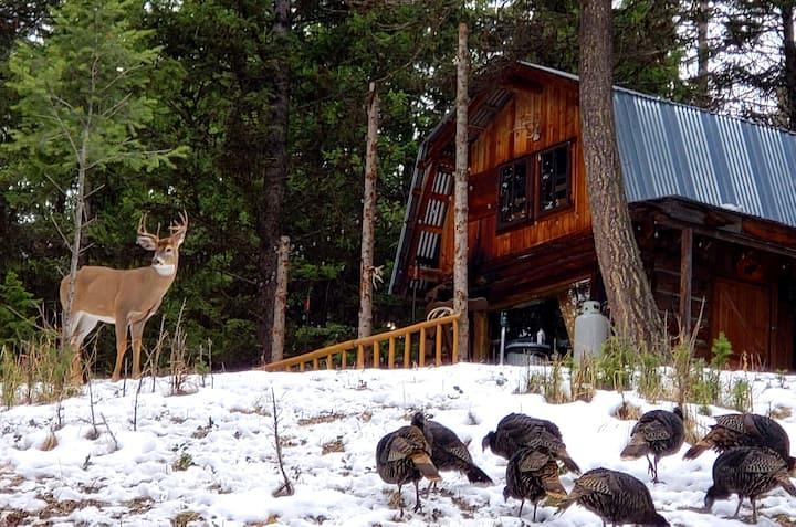Buck Ridge Log Cabin Wild game everywhere