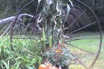 It's Foliage season here in the Northeast !