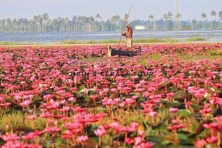Water Lilly Festival Kumarakom Room No.2