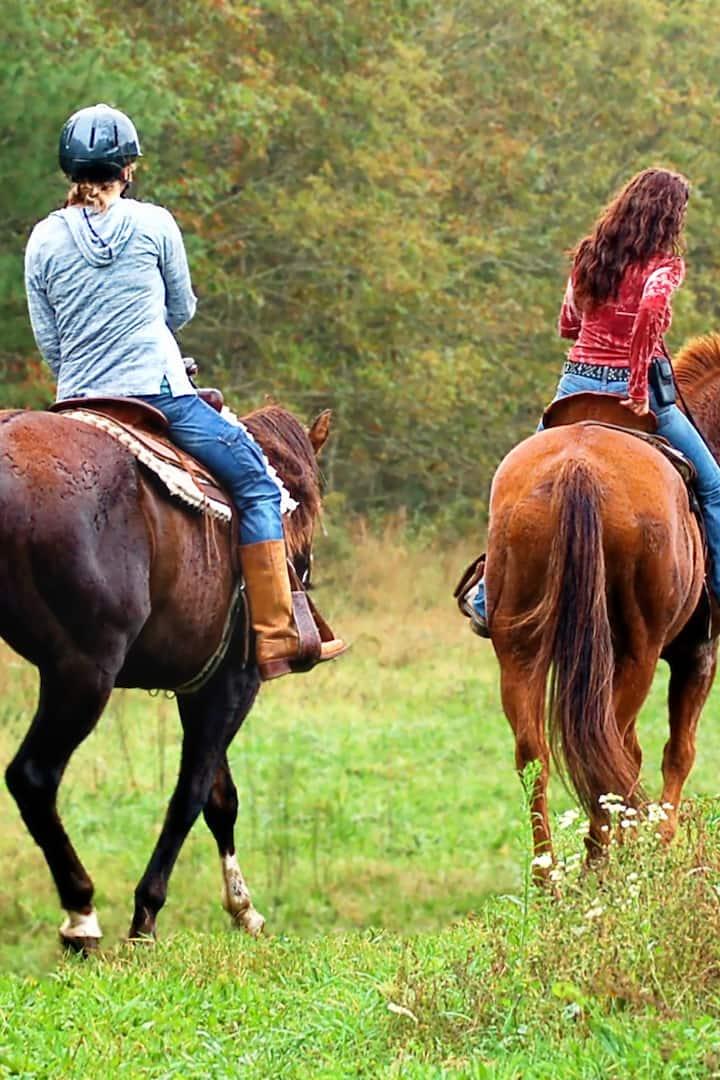 quiet responsive horses