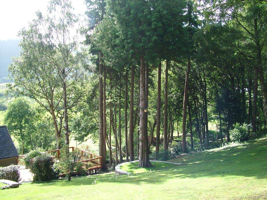Woodland garden views