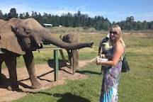 Feed the elephants at Knysna Elephant Park, such a memorable and special experience!