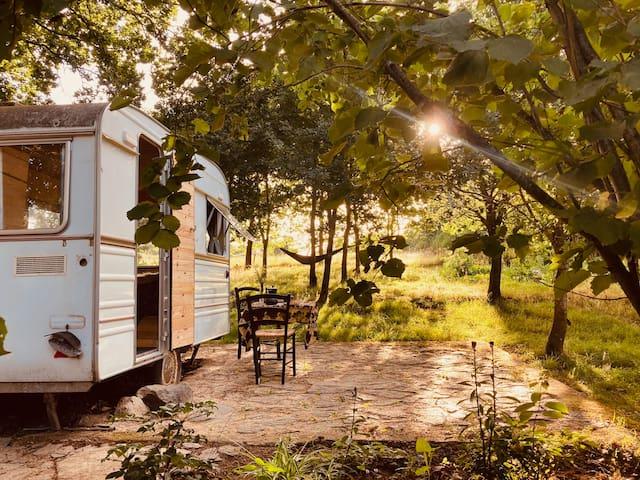Chambre Caravane sous les Chênes