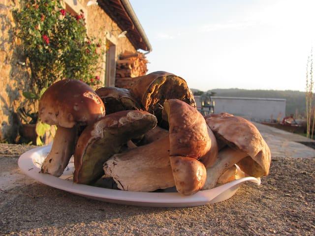 Cueillette de champignons aux alentours