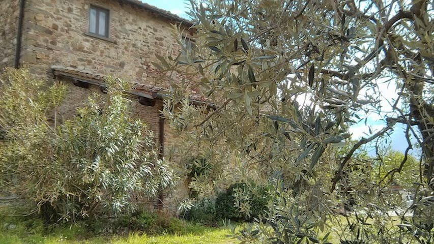 Lino's Farmhouse through silver green olive tree.
