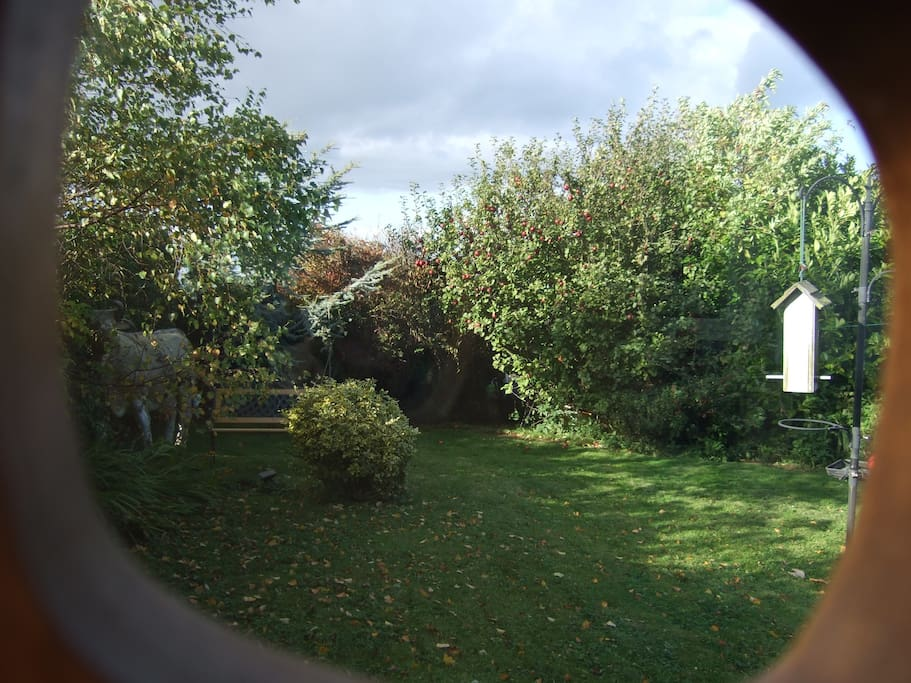 View from conservatory towards the apple tree and sea!