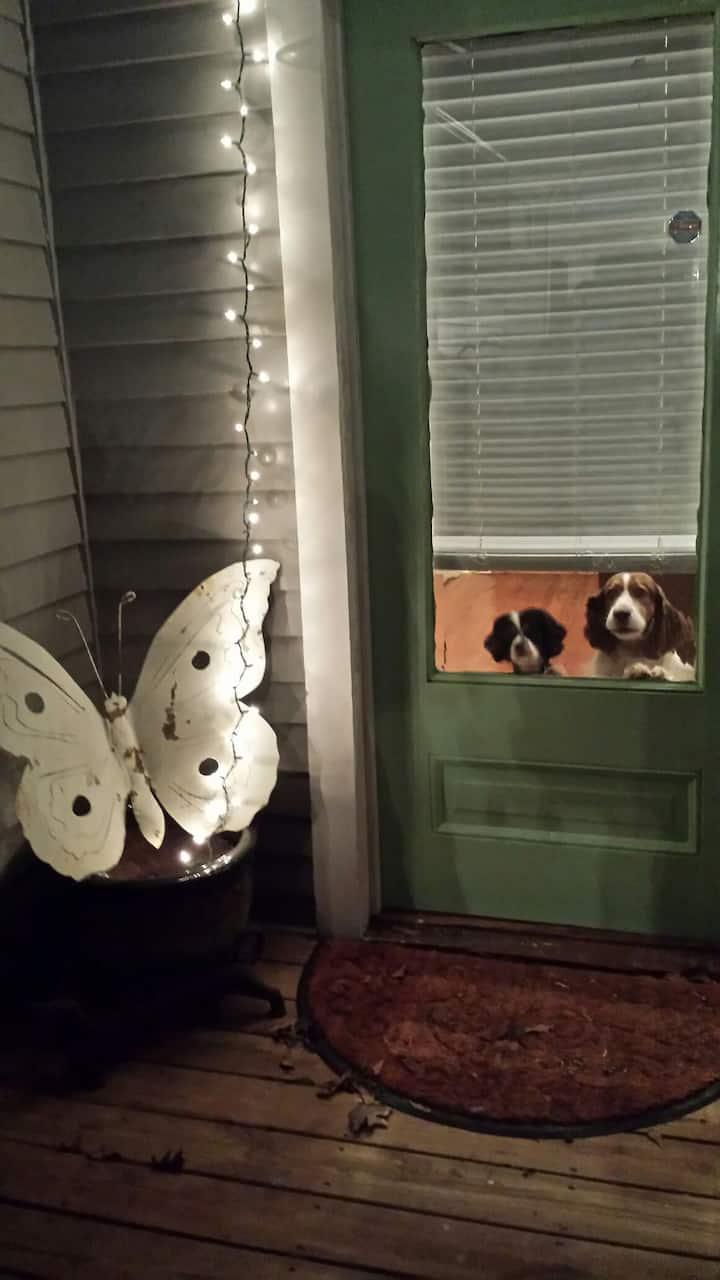 Pet Friendly Suite Longer Term available