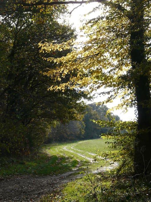 belles promenades dans la forêt