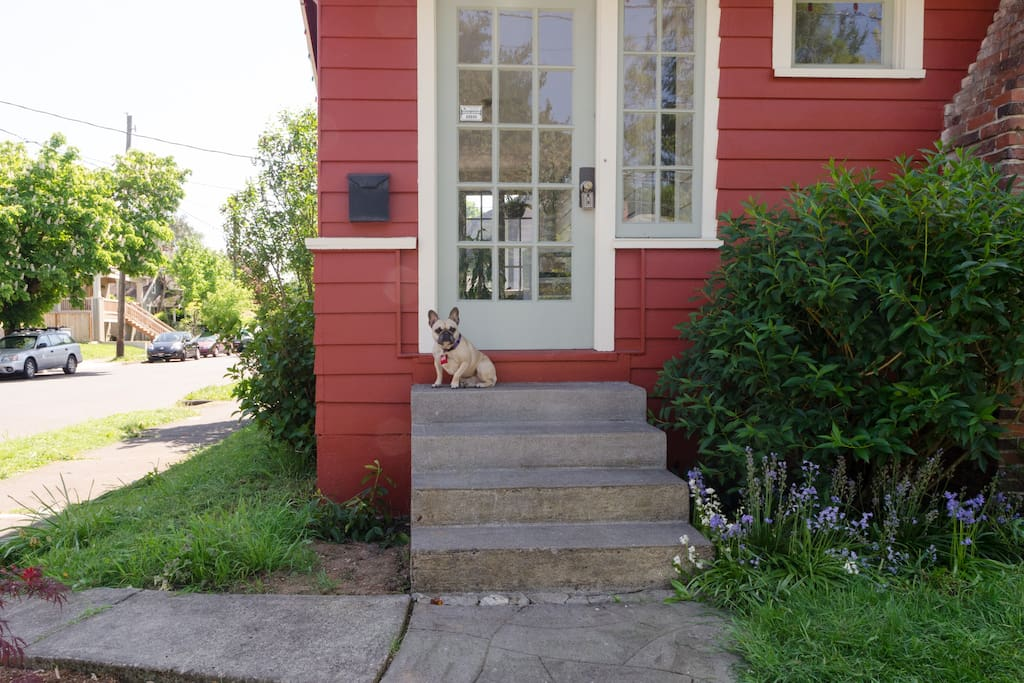 Dixie (our frenchie) will welcome you if we aren't home!