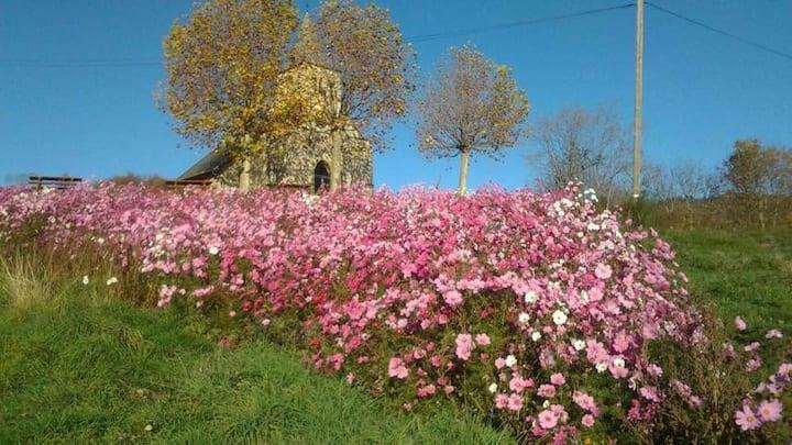 Maison - Ferme au milieu des vignes beaujolaises