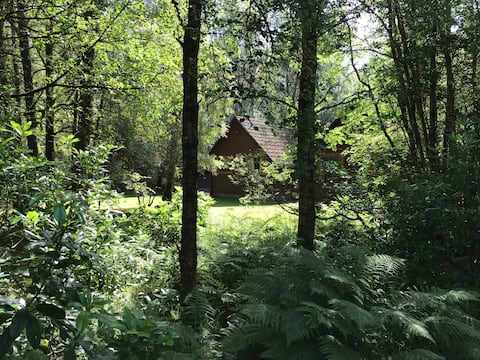 Woodland twin lodge, peaceful location, takes dogs